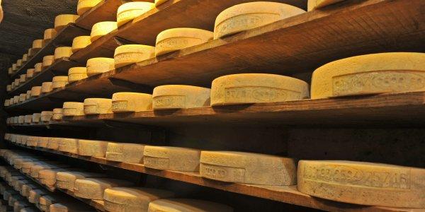 Il Casera valtellinese, un formaggio DOP unico