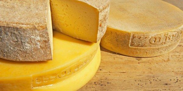 Il Bitto DOP, principe dei formaggi d'alpeggio